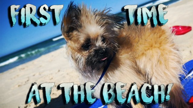 PUPPY'S FIRST TIME AT THE BEACH - Vlog #9